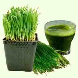 Best Wheatgrass Juicer : Wheatgrass Juicer Reviews Juicer